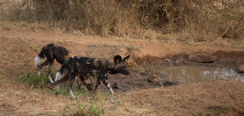 Northern Kenya safari - January 2015 - Page 2 Kt8h0923