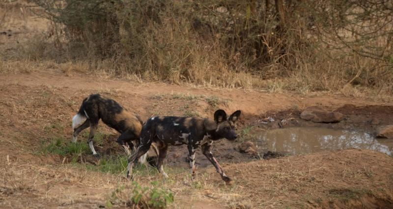 Northern Kenya safari - January 2015 - Page 2 Kt8h1010