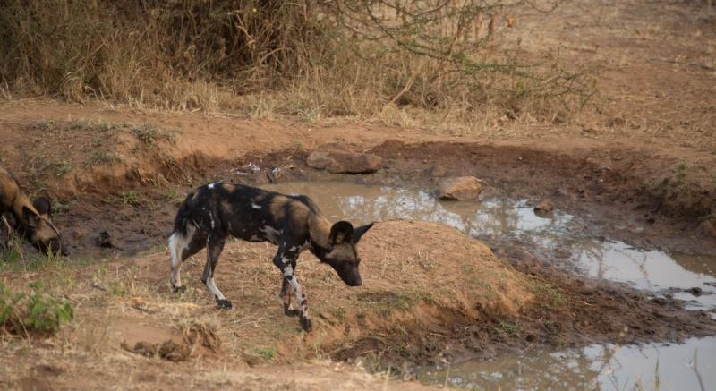 Northern Kenya safari - January 2015 - Page 2 Kt8h1011