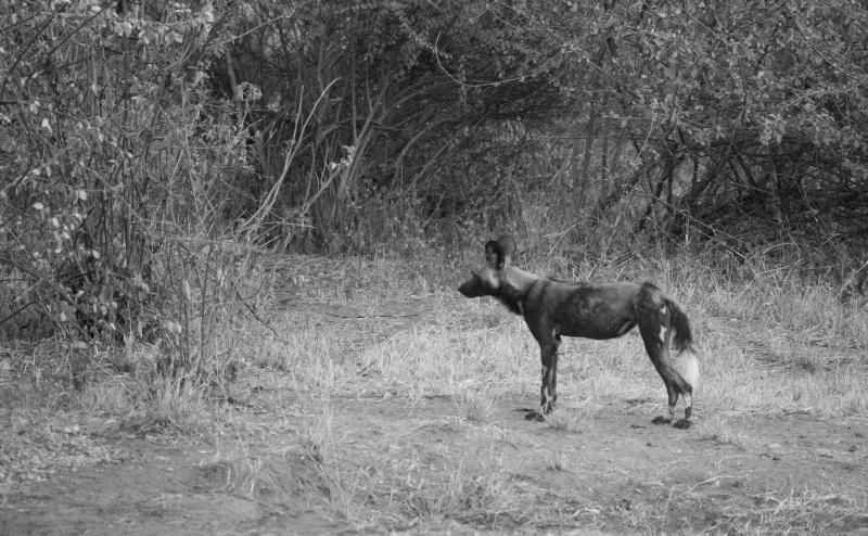 Northern Kenya safari - January 2015 - Page 2 Kt8h1013
