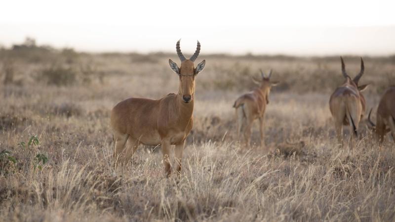 Northern Kenya safari - January 2015 - Page 2 Ou5a1320