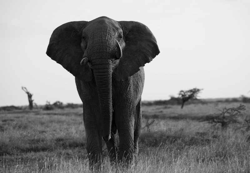 Northern Kenya safari - January 2015 - Page 2 Ou5a1321