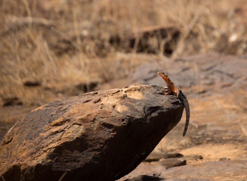 Northern Kenya safari - January 2015 - Page 2 Ou5a1510