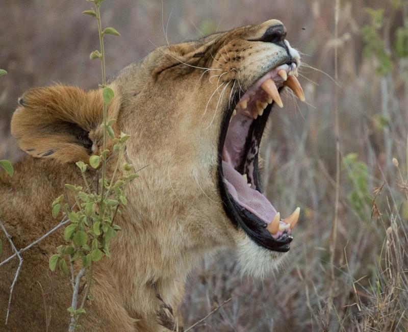 Northern Kenya safari - January 2015 - Page 2 Ou5a1511
