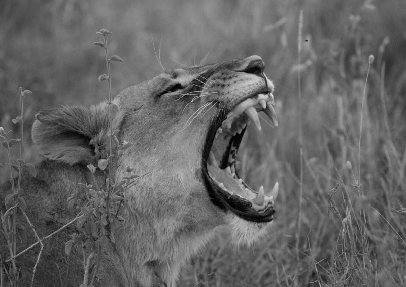 Northern Kenya safari - January 2015 - Page 2 Ou5a1512