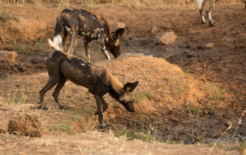 Northern Kenya safari - January 2015 - Page 2 Ou5a1514