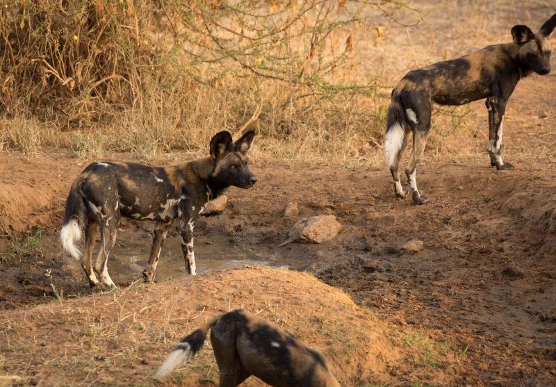 Northern Kenya safari - January 2015 - Page 2 Ou5a1515