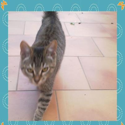 BANJO, chaton de 6 mois à l'adoption (59) -R-VV-LBC- F 30970_10