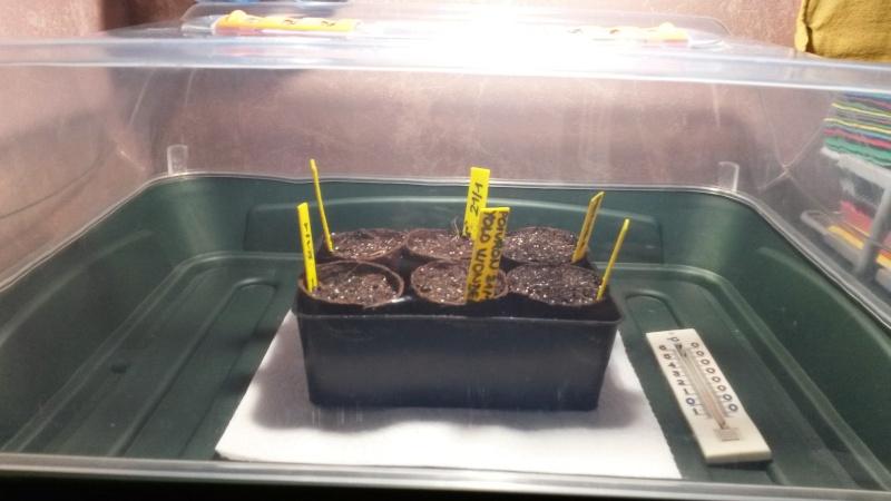 Essai de semis en lumière artificielle 21-01_11