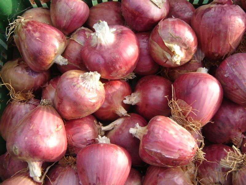 Το βατικιώτικο κρεμμύδι στις Κυκλάδες. Dsc03410