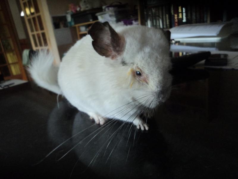 Betty chichi adorable Dsc04013