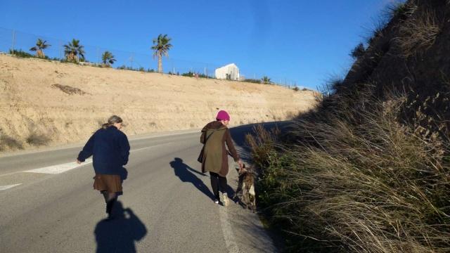 sauvetage en cours, Lena, chienne malade trouvée au bord de la route, Murcia Espagne. janvier 2015. P1090010
