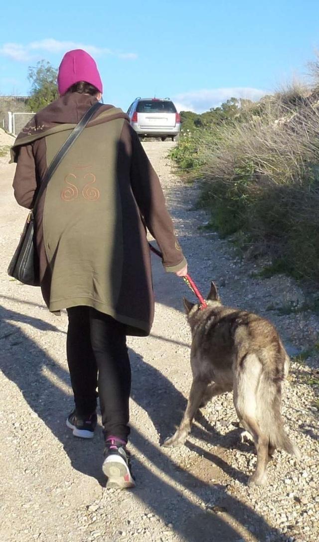 sauvetage en cours, Lena, chienne malade trouvée au bord de la route, Murcia Espagne. janvier 2015. P1090011