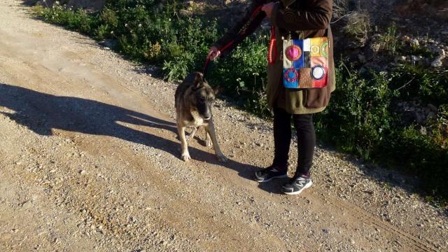 sauvetage en cours, Lena, chienne malade trouvée au bord de la route, Murcia Espagne. janvier 2015. P1090012