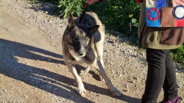 sauvetage en cours, Lena, chienne malade trouvée au bord de la route, Murcia Espagne. janvier 2015. P1090014