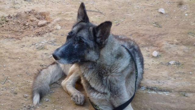 sauvetage en cours, Lena, chienne malade trouvée au bord de la route, Murcia Espagne. janvier 2015. P1090017