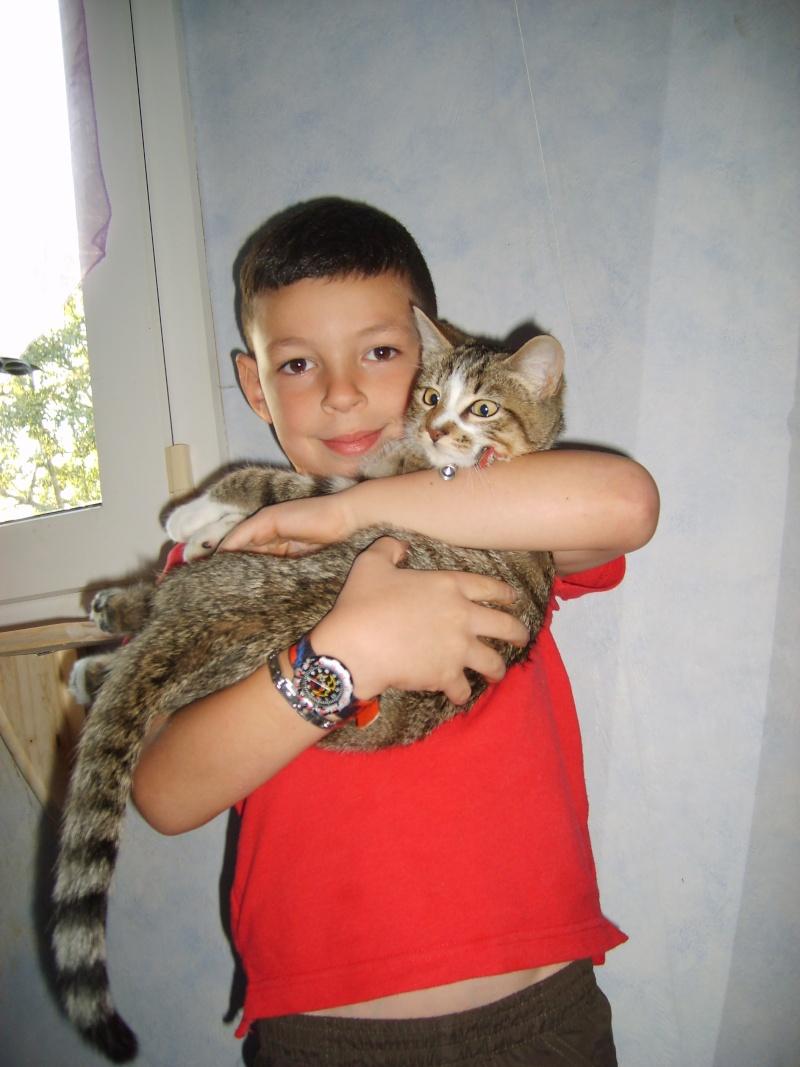 Hadès, chaton tigré et blanc né le 11/05/2012  par NADINE (36) S6000013