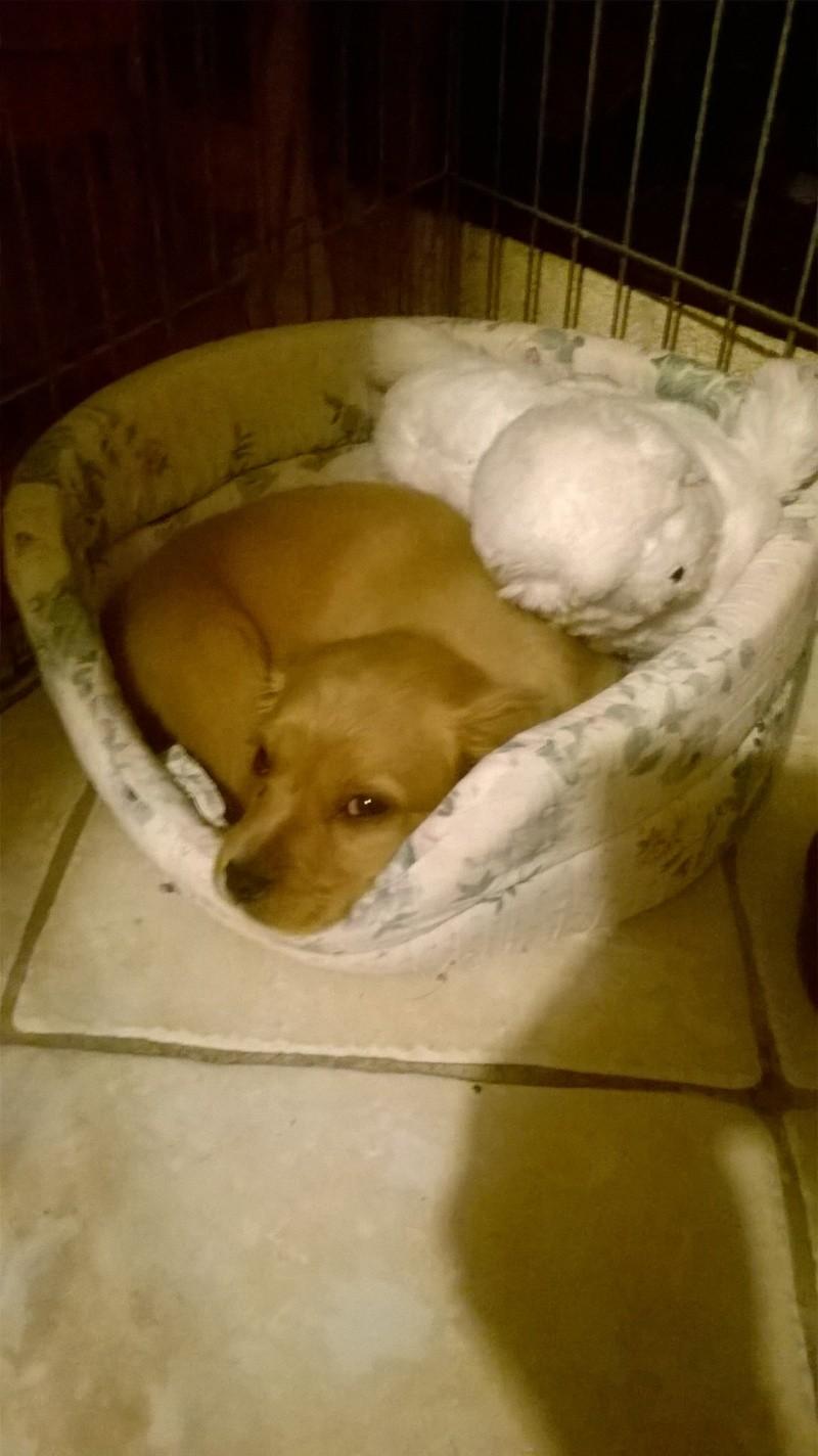 Adopter un chiot.... Wp_20126