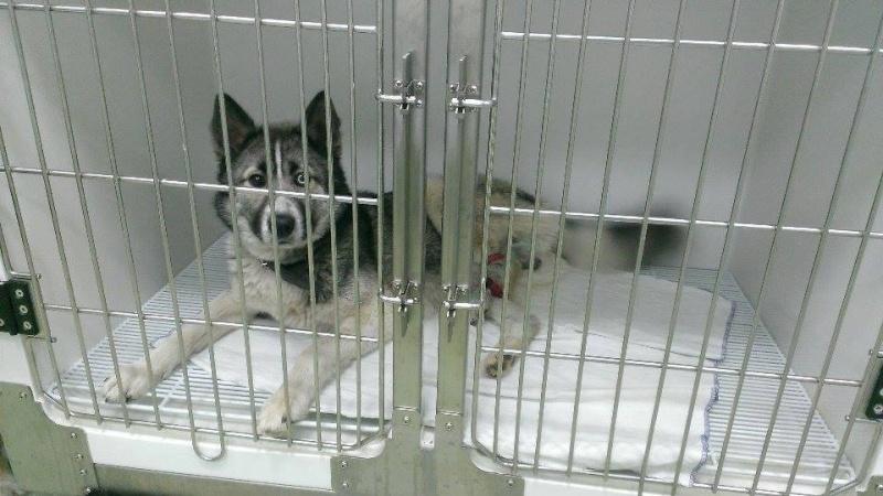 Grande urgence pour Blue et Jack qui ont besoin de votre aide en Roumanie  8 mois et 1 an   10407410