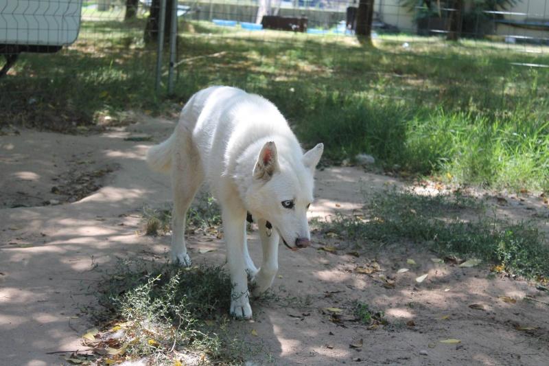 Orca, Husky, âgée de 14 ans née 20 Décembre 2000,  Eden Valley  ASSO39 - Page 4 10553710