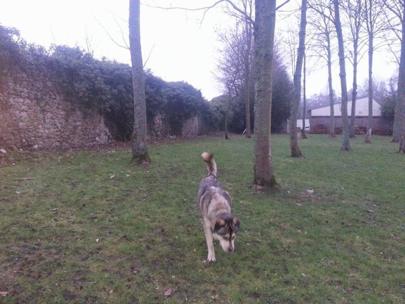 TYSON x husky  labrador né 11/2012/ sociable joueur équilibré  REF78 ADOPTER - Page 2 10898210