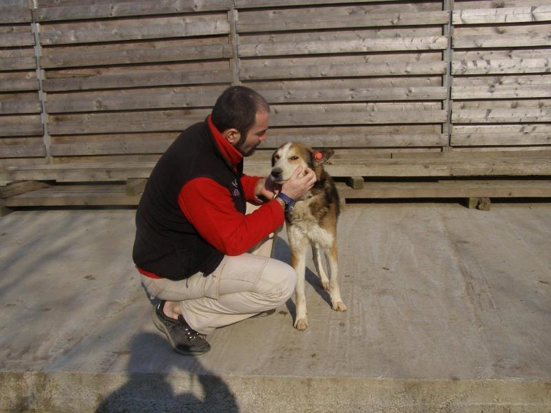 TANOOK x husky (m)  7 ans  ROUMANIE URGENT 11025811