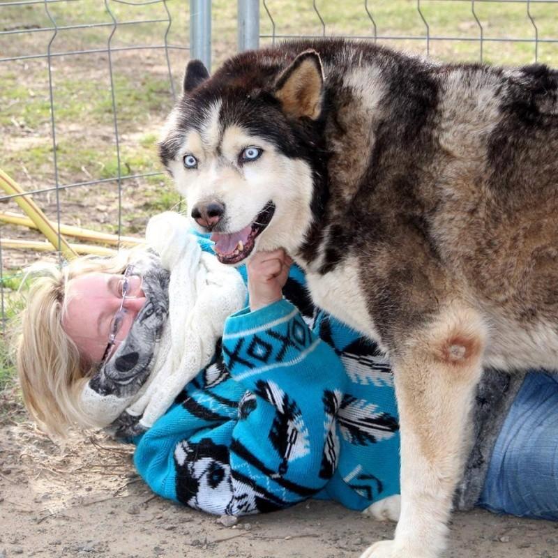 Togo, husky gris né le 25 Octobre 2002 ASSO39 - Page 3 11045311