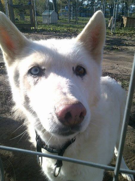 Orca, Husky, âgée de 14 ans née 20 Décembre 2000,  Eden Valley  ASSO39 - Page 4 14673810