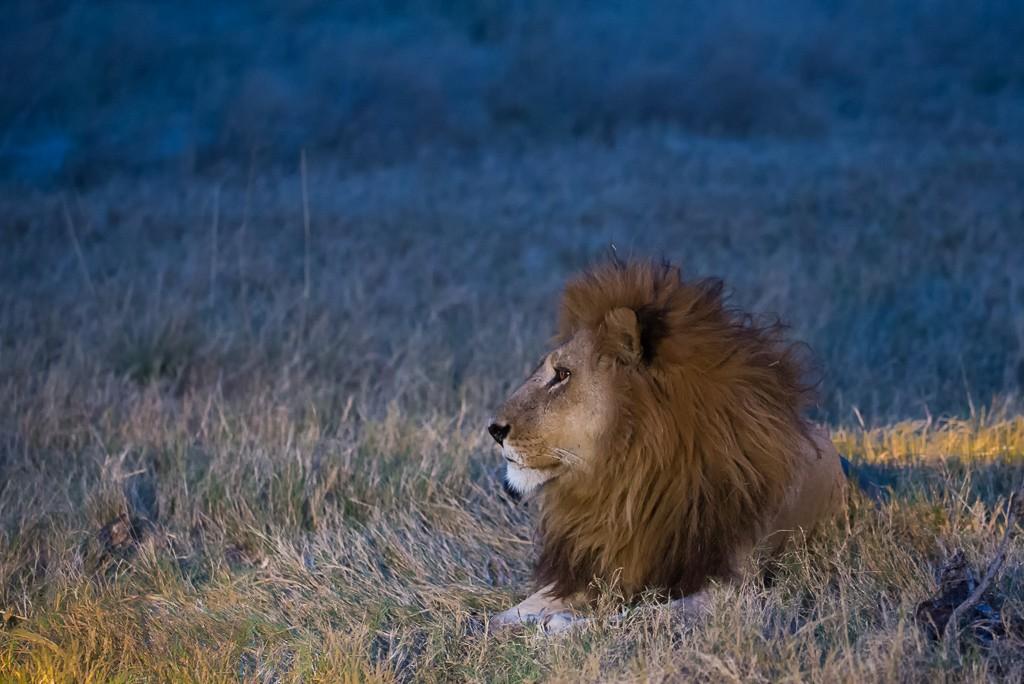 Lion sleeps tonight _dsc2911