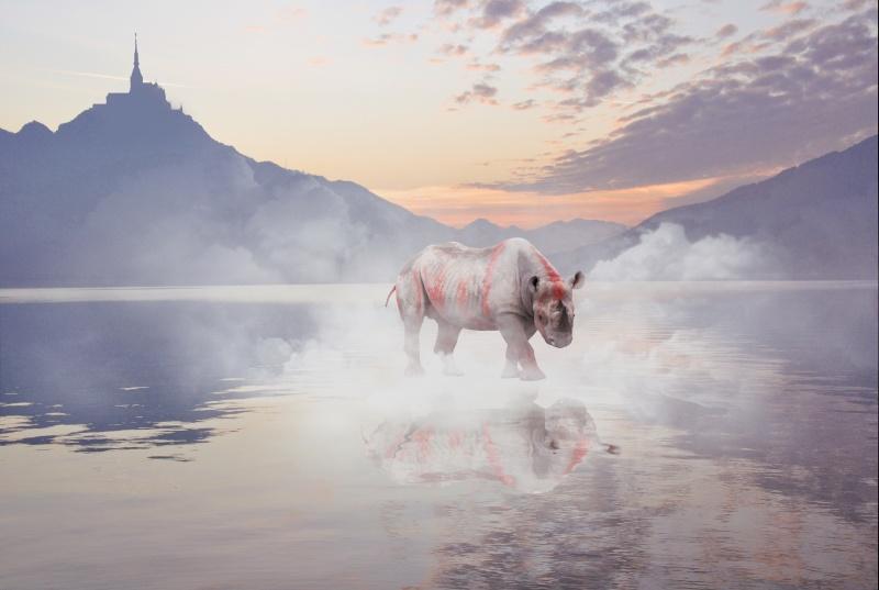 Les contes de Gazal Rhino10