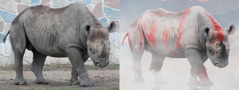 Les contes de Gazal Rhino11