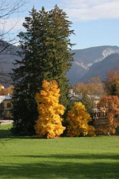Chateaux  d'Autriche Ahorn-10