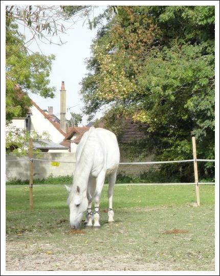 Propose de dessiner gratuitement vos chevaux !  - Page 3 Jiva_b10