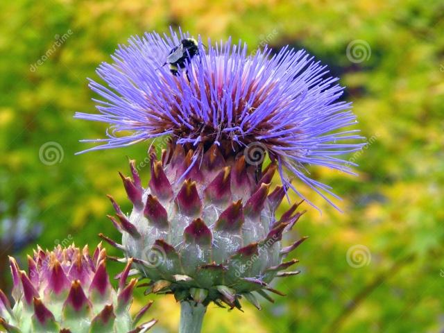 Thế giới các loài hoa Bee-ar13