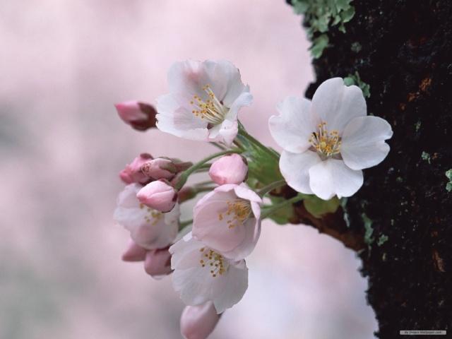 Thế giới các loài hoa Free-w10