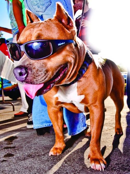 Test sunglasses Bomber 22426910
