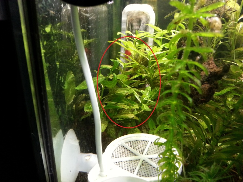 Identification plante. 20150314