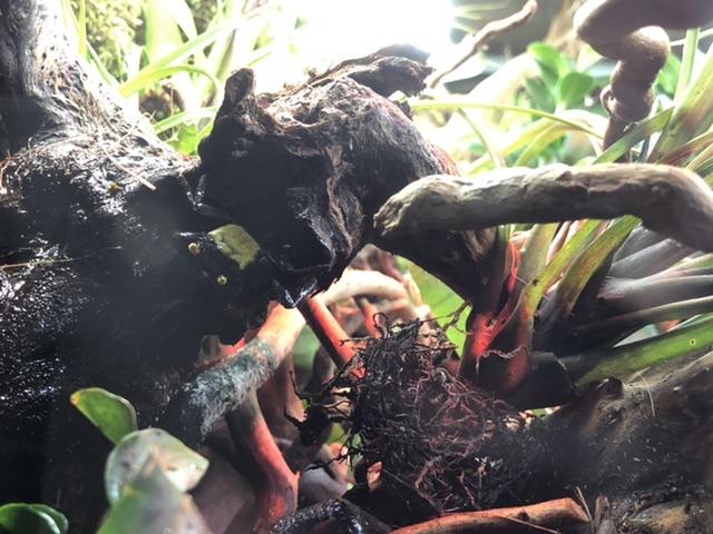 Nouveauté sur le forum l'eco-palu Ddab0810