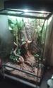 Mes colocataires....bci colombie et pantherophis bairdi 20150213