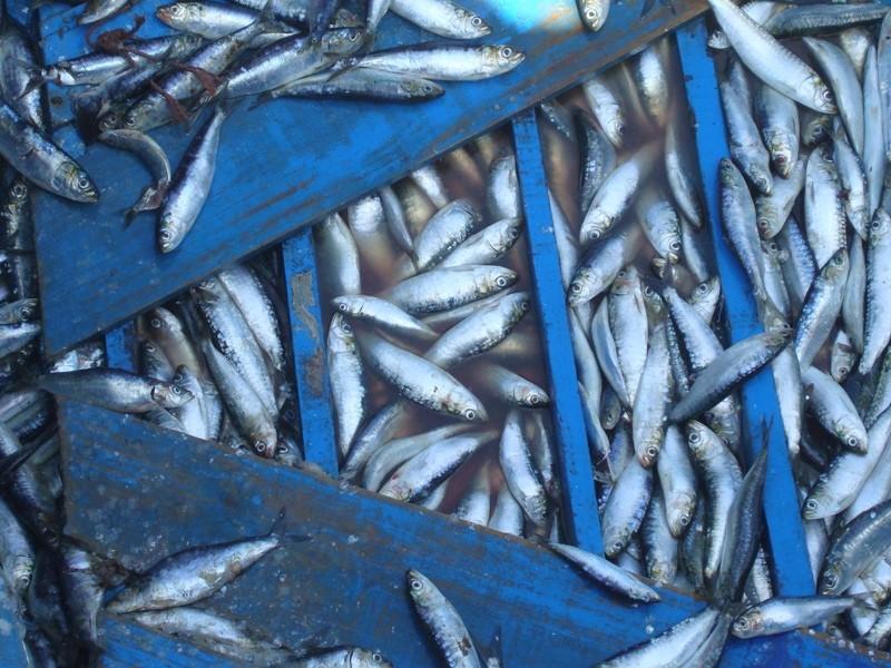 La pêche ,le poisson,les marins et l'activité au port Dsc03112