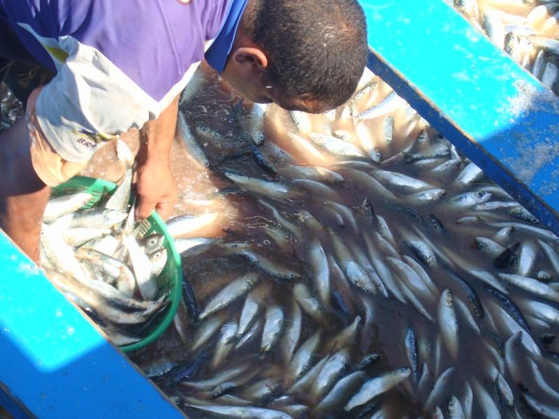 La pêche ,le poisson,les marins et l'activité au port Dsc03114