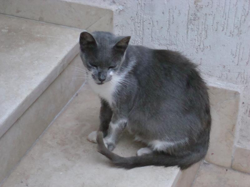 Les Chats d'Essouira Dsc05717