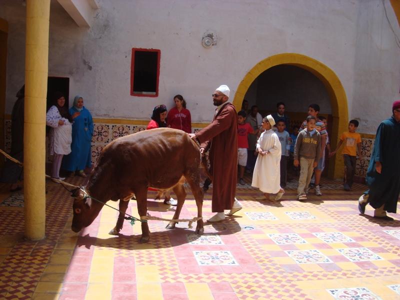 Moussem Hmadcha 2010 Dsc06212