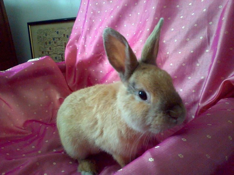 Skippy, jeune lapin roux - Page 2 Img-2010
