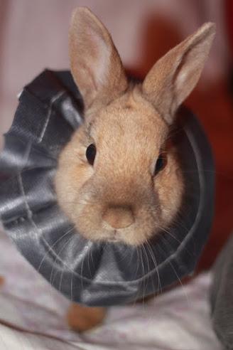 Skippy, jeune lapin roux - Page 2 Postst10