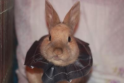 Skippy, jeune lapin roux - Page 2 Postst11