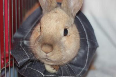 Skippy, jeune lapin roux - Page 2 Postst12