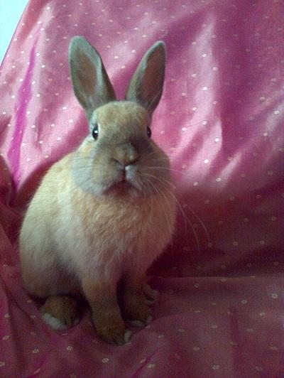 Skippy, jeune lapin roux - Page 2 Skippy10
