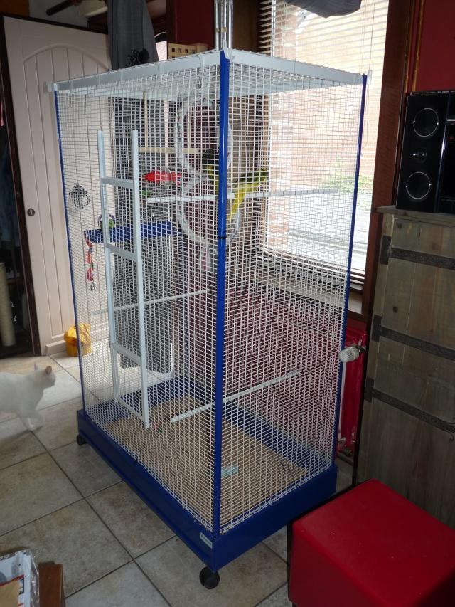 Nouvelle cage pour mes kakettes!! P1010510