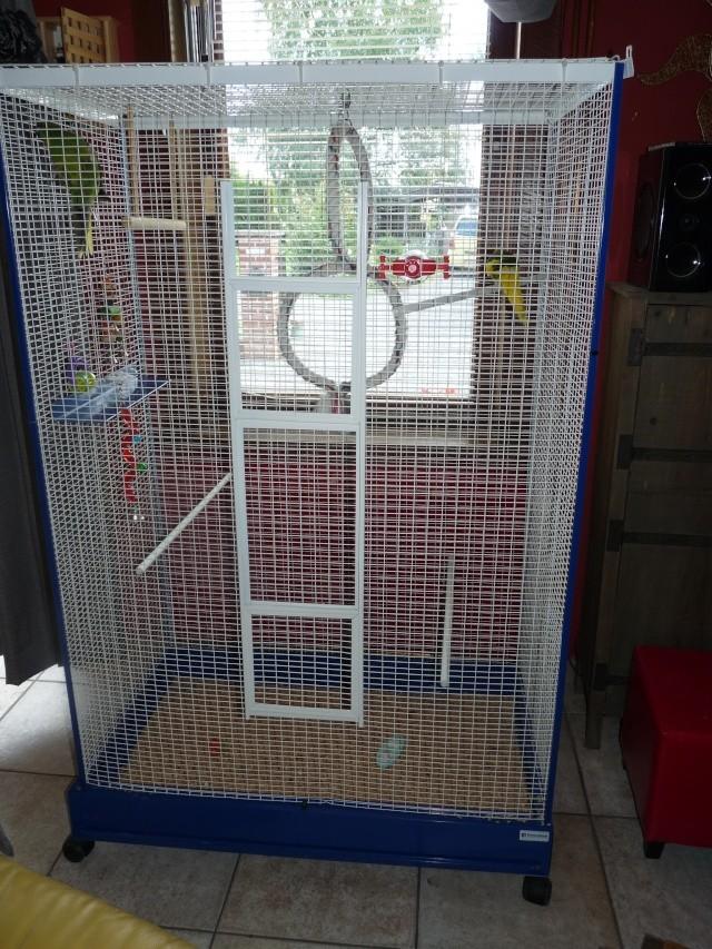 Nouvelle cage pour mes kakettes!! P1010511